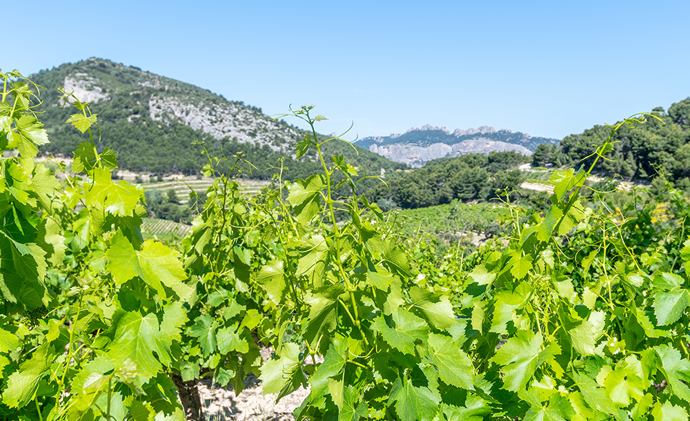 Wine lovers guide to france