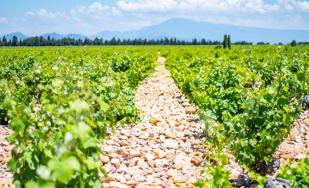 wine expert guide in Provence France